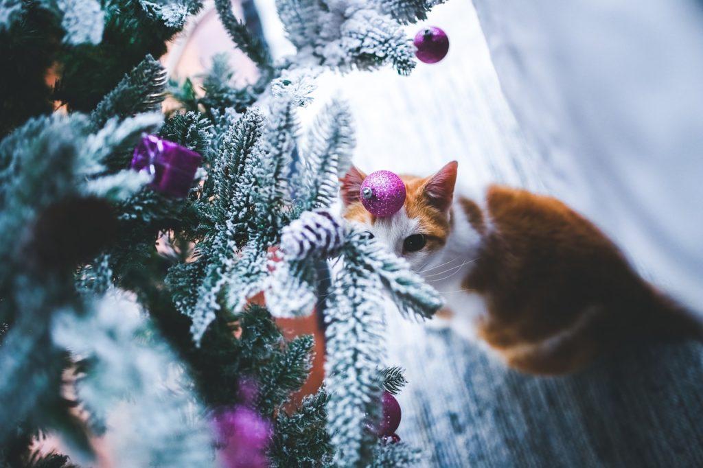 Kočka astromeček